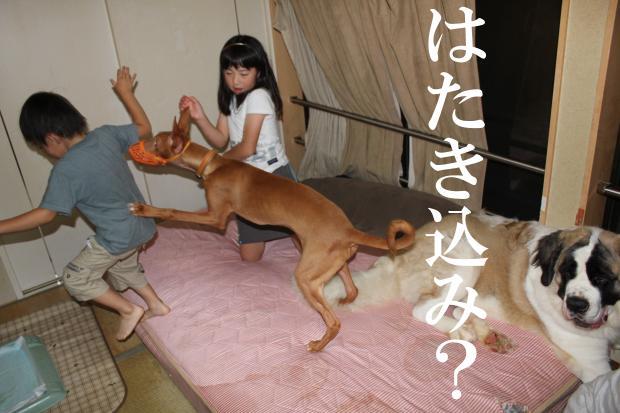 03_20110620041417.jpg