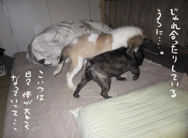 05_20110504235441.jpg