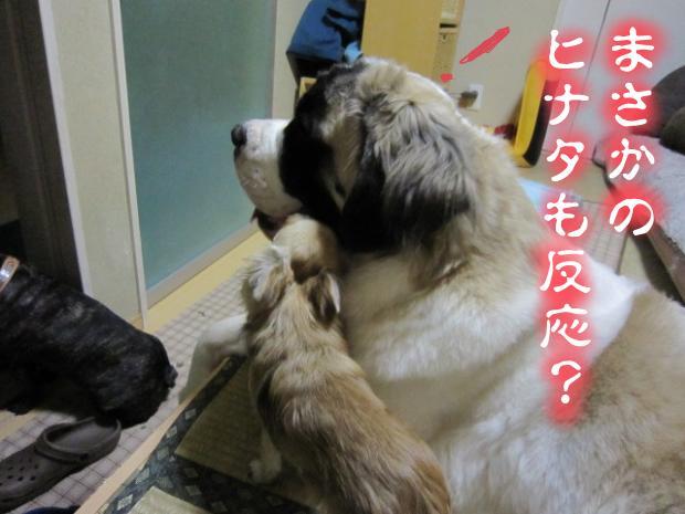 05_20110511021147.jpg
