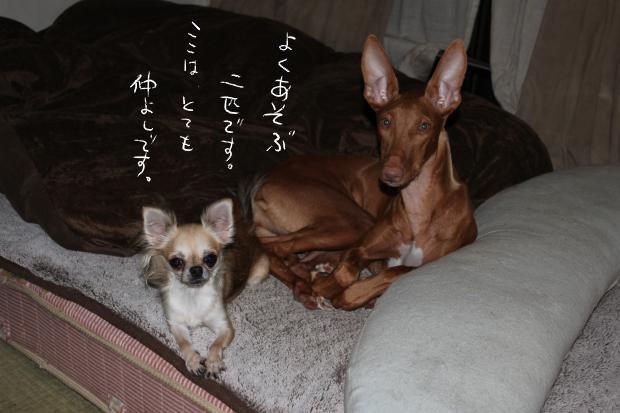 05_20111018014527.jpg