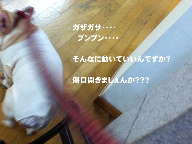 06_20111104145610.jpg