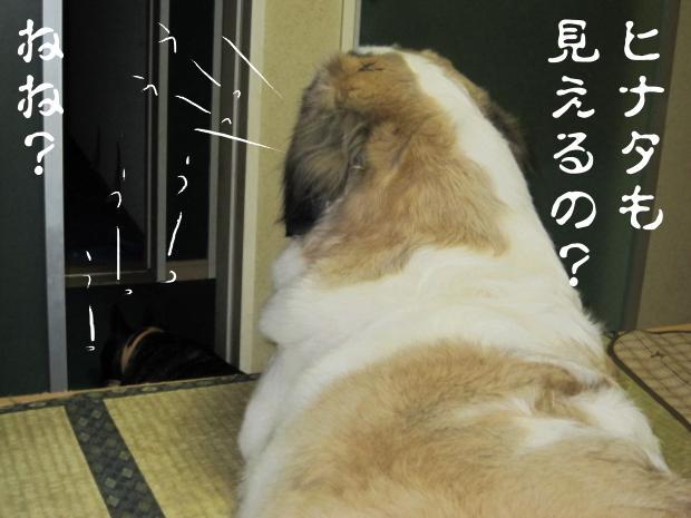 07_20110511021147.jpg