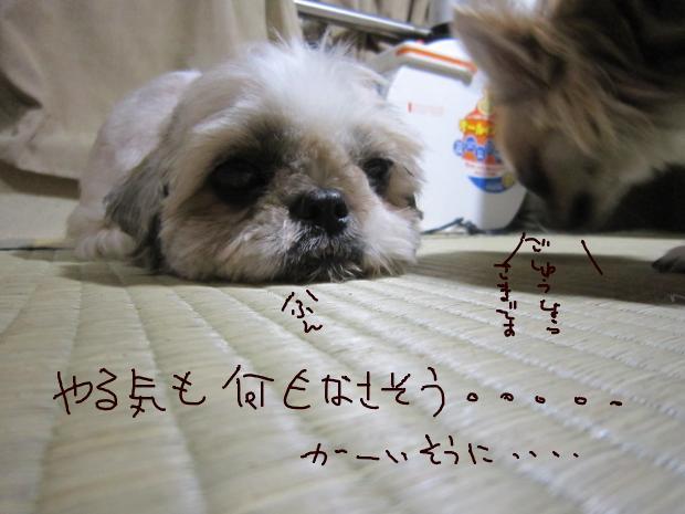 07_20110626072907.jpg
