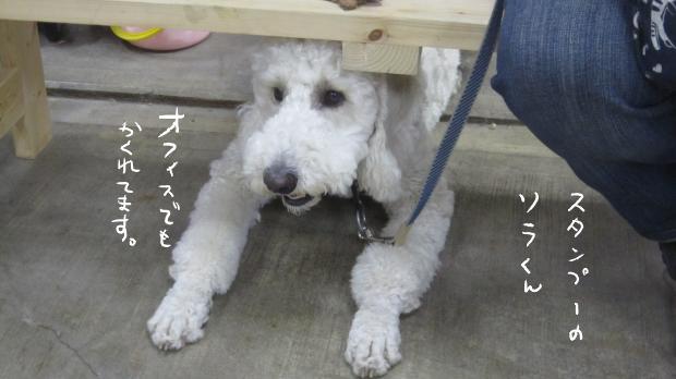 07_20111114023655.jpg