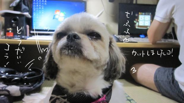 08_20111001233351.jpg