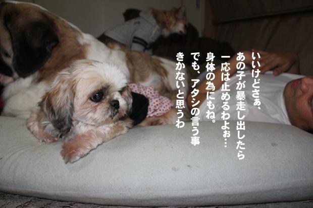 08_20111105225921.jpg