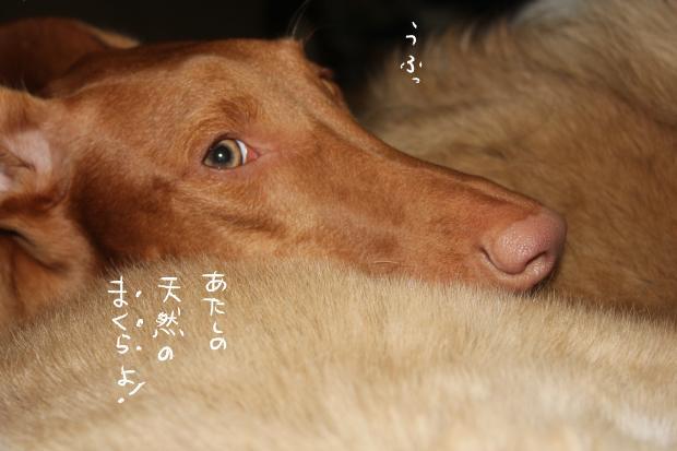 08_20111115231611.jpg