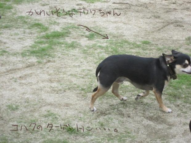 09_20110613015451.jpg
