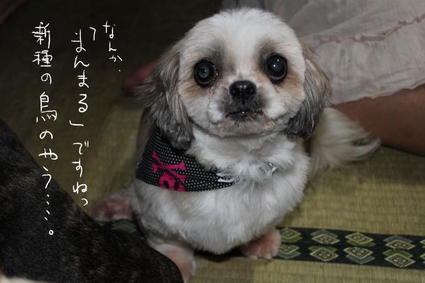 09_20111001233351.jpg
