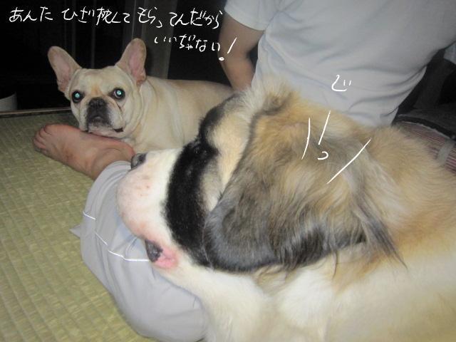 10_20110506000854.jpg