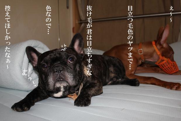 10_20110620041509.jpg