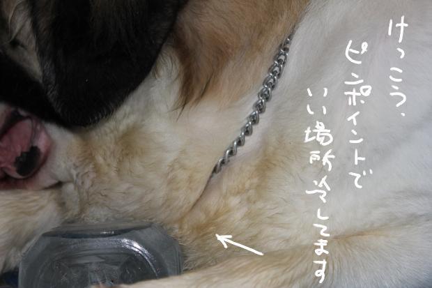 10_20110710010146.jpg