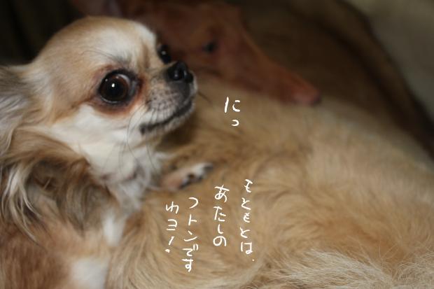 10_20111115231611.jpg