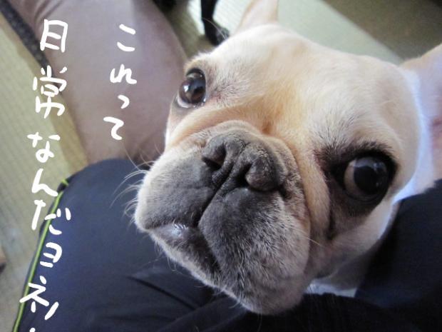 11_20110413092112.jpg
