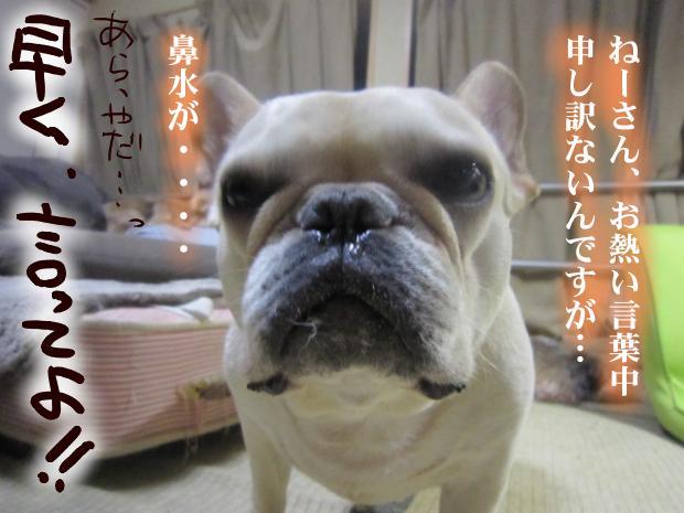 11_20110507022607.jpg