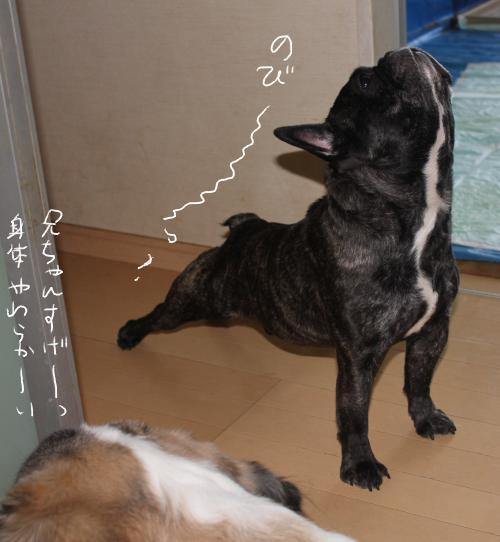 11_20110706121450.jpg