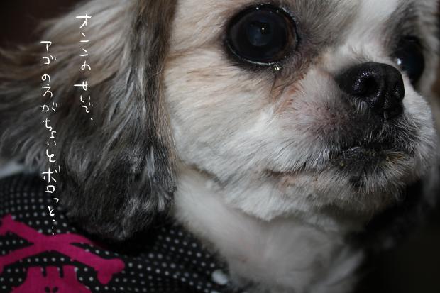 11_20111001233351.jpg