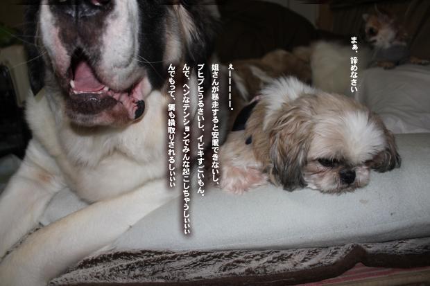11_20111105225916.jpg