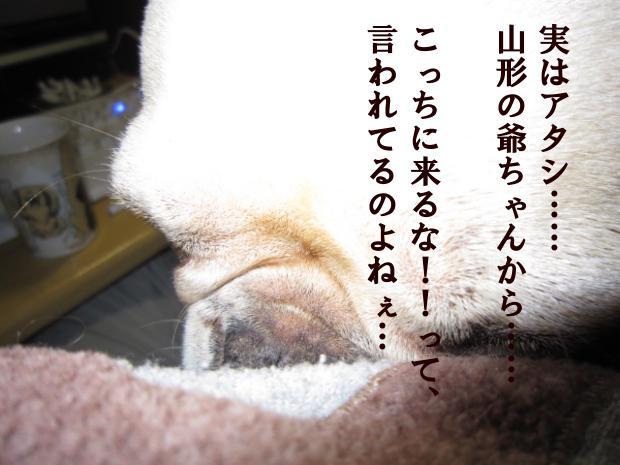 12_20110409013158.jpg