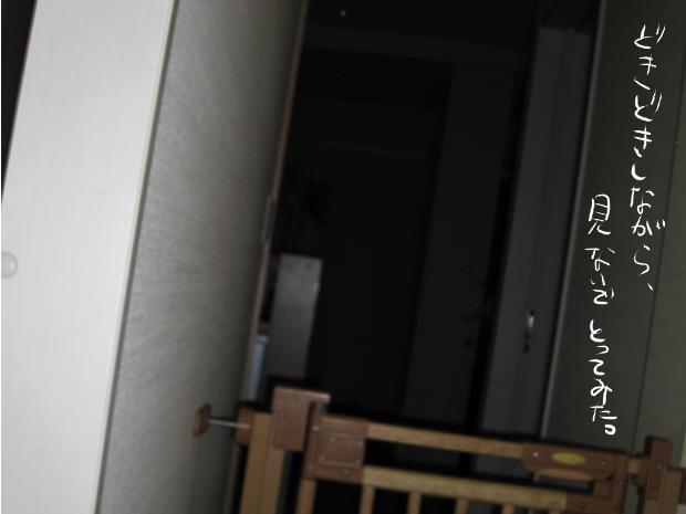 12_20110511021323.jpg