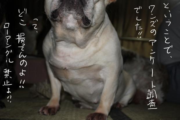 12_20110514021042.jpg