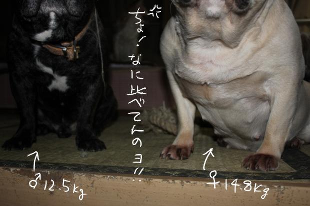 13_20110514021125.jpg