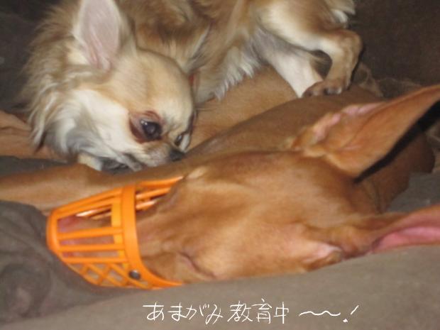 14_20110506000959.jpg