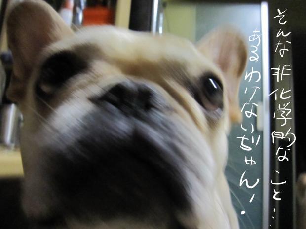 14_20110511021543.jpg