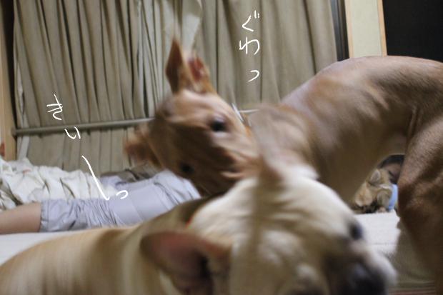 14_20110614020224.jpg