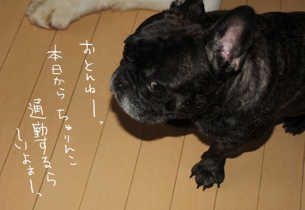 14_20110728080257.jpg