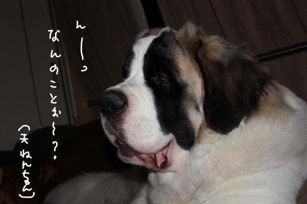 15_20110517005125.jpg