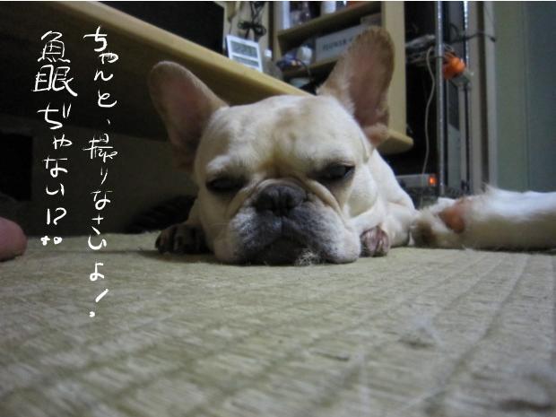 16_20110511021543.jpg