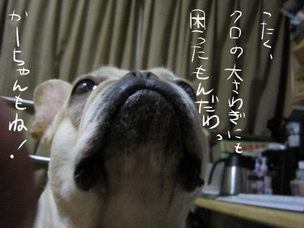 17_20110511021543.jpg
