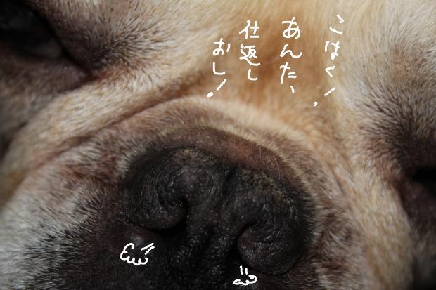18_20110517005125.jpg