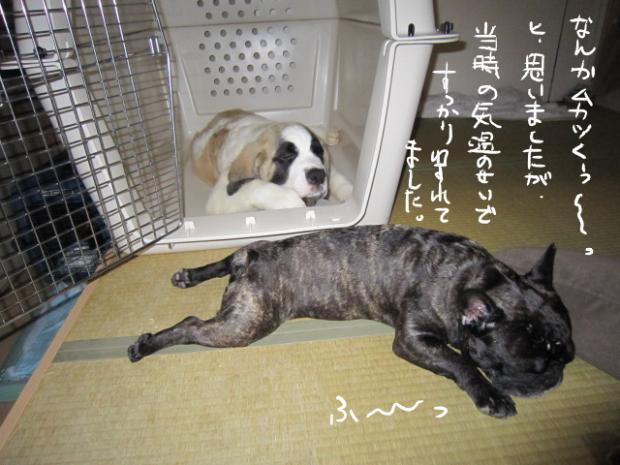 20_20110505000111.jpg