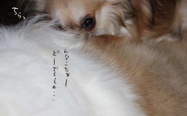 23_20110528012316.jpg