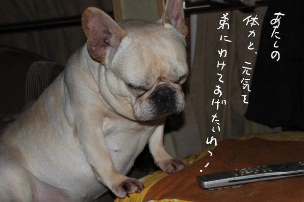 goma_20110328095706.jpg