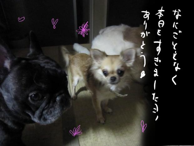 kuri_20110317081202.jpg