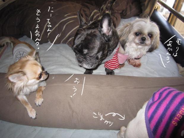 kuro1_20110401153500.jpg