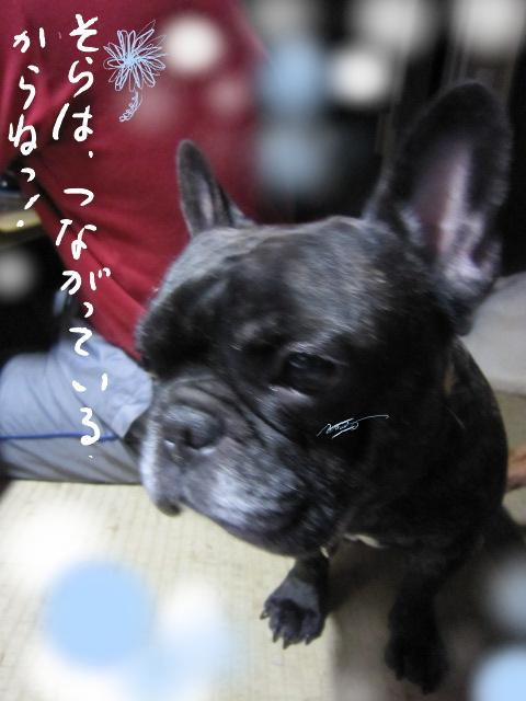 kuro_20110317081202.jpg