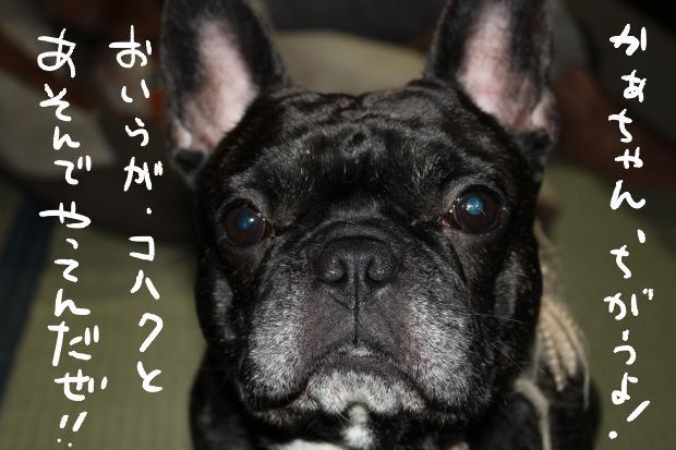 kuro_20110616015535.jpg