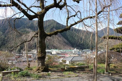 hananeko_029_20120403235530.jpg