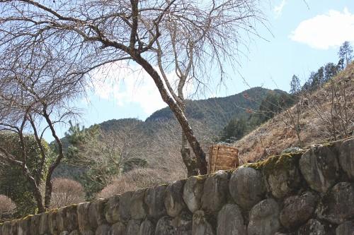 hananeko_167.jpg