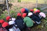 収穫とマーチン具 (5)