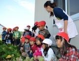 収穫とマーチン具 (2)
