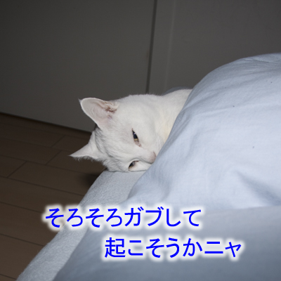 20101215_03.jpg