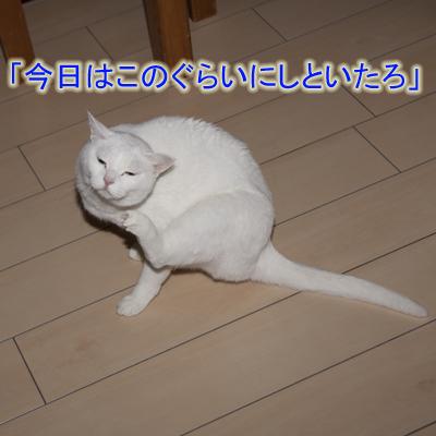 20101222_09.jpg