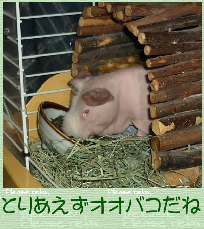 オオバコ2