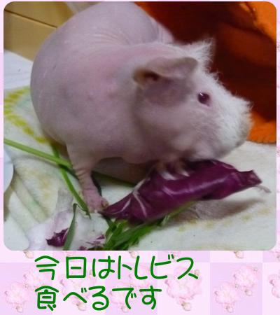 野菜摂取2