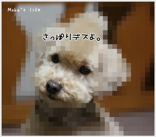 1_20100120001055.jpg